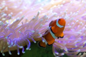 Travel Guide for Visiting the Great Barrier Reef in Australia