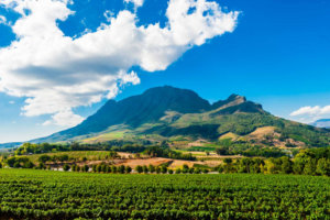 5 Amazing Wine Destinations in Africa for Delicious Drinks and Beautiful Views