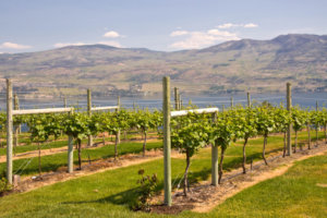 7 Amazing Fall Wine Tours Across the U.S. and Canada